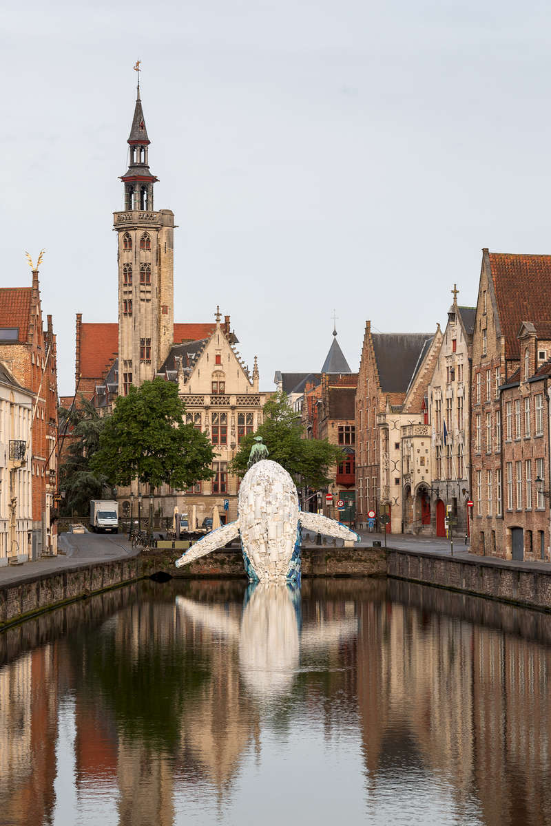 Bruges Whale vertical pic by Matthias Desmet.jpg