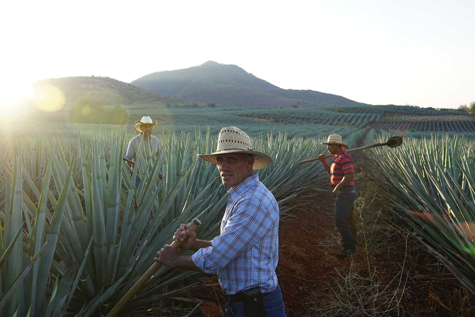 Cazadores_Agave-Lifecycle_Agave-Field-Jimadors-1.jpg