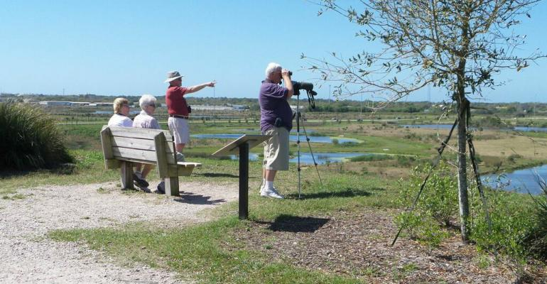Bird Watching at Celery Fields