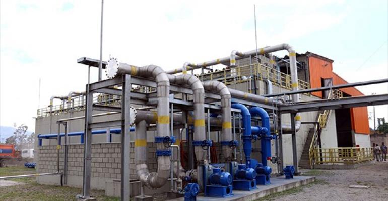 Rio-plant.jpg