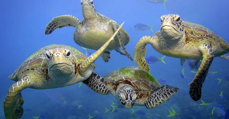 WWF-Troy-Mayne-Image-Sea-Turtles.jpg