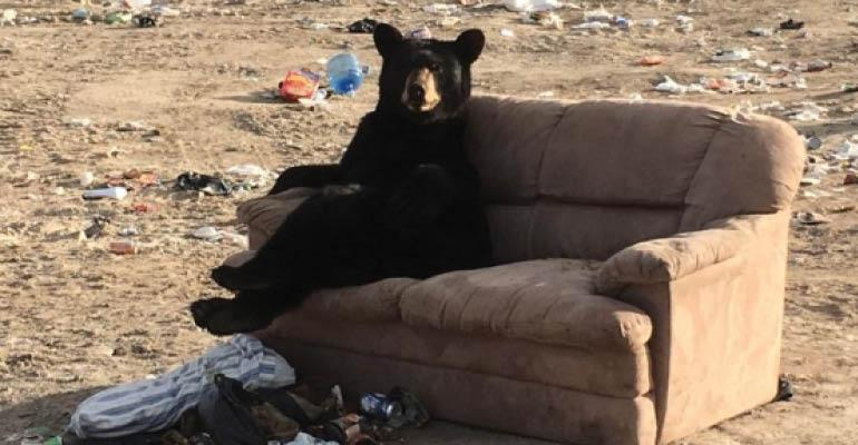 bear on couch