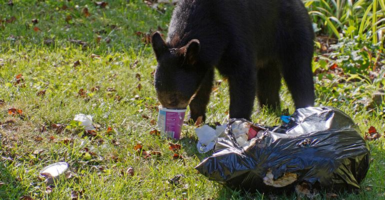 Colorado Springs, Colo., Passes Bear-proof Trash Can Ordinance