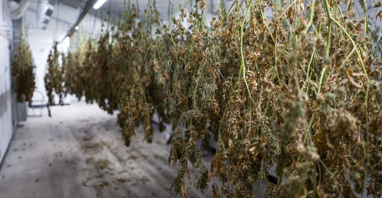 marijuana-warehouse_Drew Angerer_Getty Images-592213270.jpg