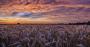 wheatfeat.png