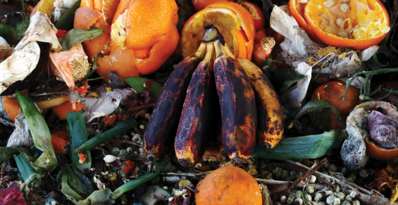 Memphis Food Waste Composting Interest Grows Five Times During Pandemic