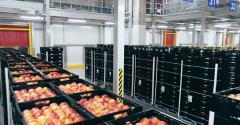 SiCar Farms Extends Use of IFCO Reusable Plastic Containers