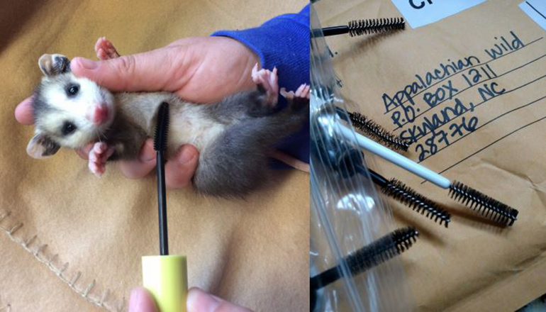 Wands For Wildlife Puts Discarded Mascara Wands To Work